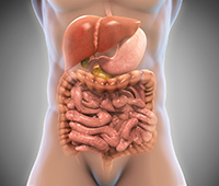 Gastrointestinal system/ concept of agni Ayurvedic treatment